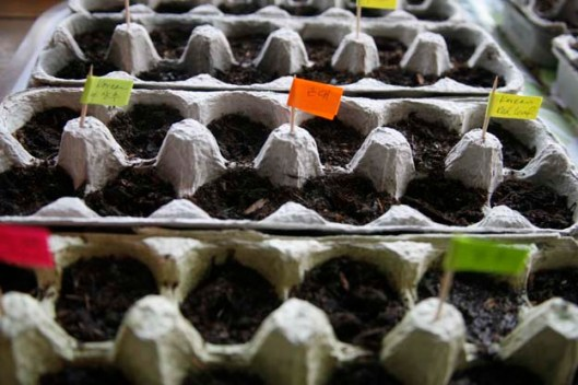 Seedling in Egg Carton