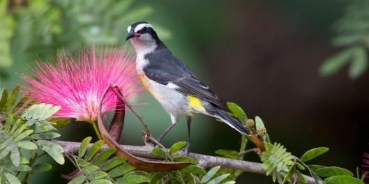 andros birding