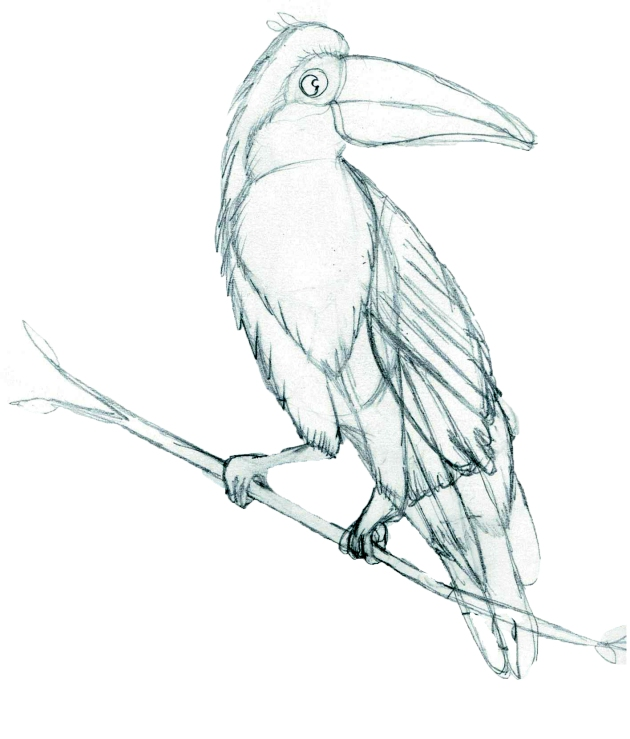 rainforest landscaping tucan sketch 001 no writing